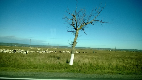 driving from cluj to oradea - october 2013 (34)